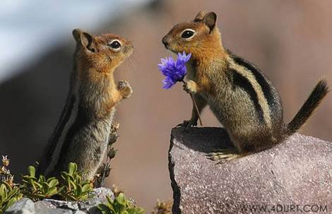 Squirrel courting